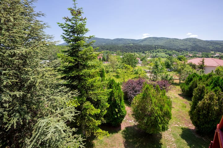 4000m2 Garden full of trees and nature