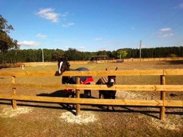 Horse Farm #4 Pets Welcome Devils Den, Blue Grotto