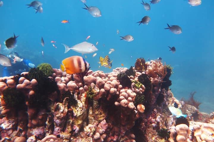 Snorkeling & Diving at Bloo Lagoon Eco Village