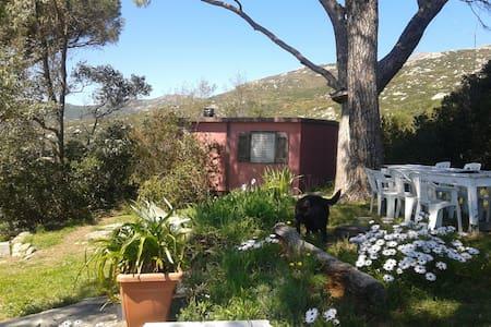 all'elba un po' fuori dal tempo    - San Piero In Campo - House