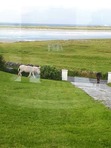 Aran Islands, Inish Mor House for all the Family.