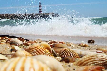 Algarve, entre Fuseta e Olhão - Moncarapacho