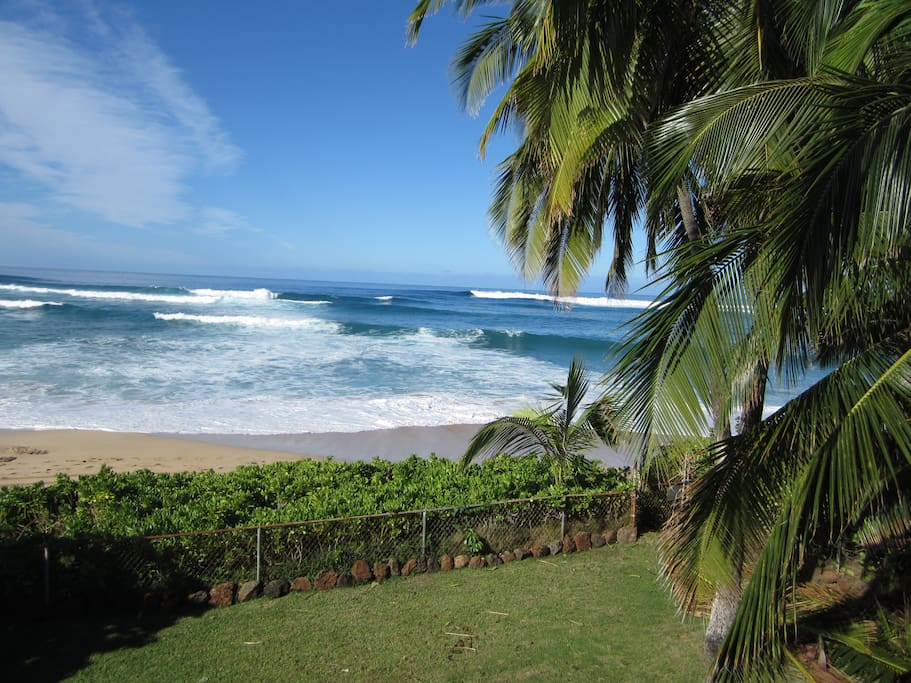 Famous Makaha surf from our front yard