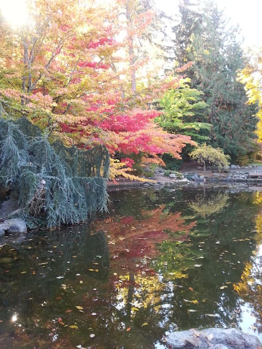 Lithia pond in the fall...