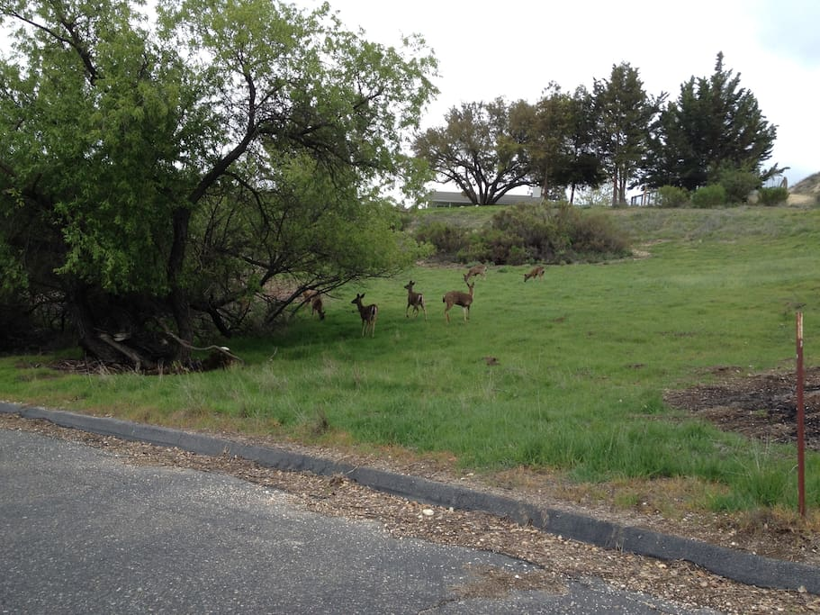 As you drive up, don't be surprised to be greeted by a herd of deer.