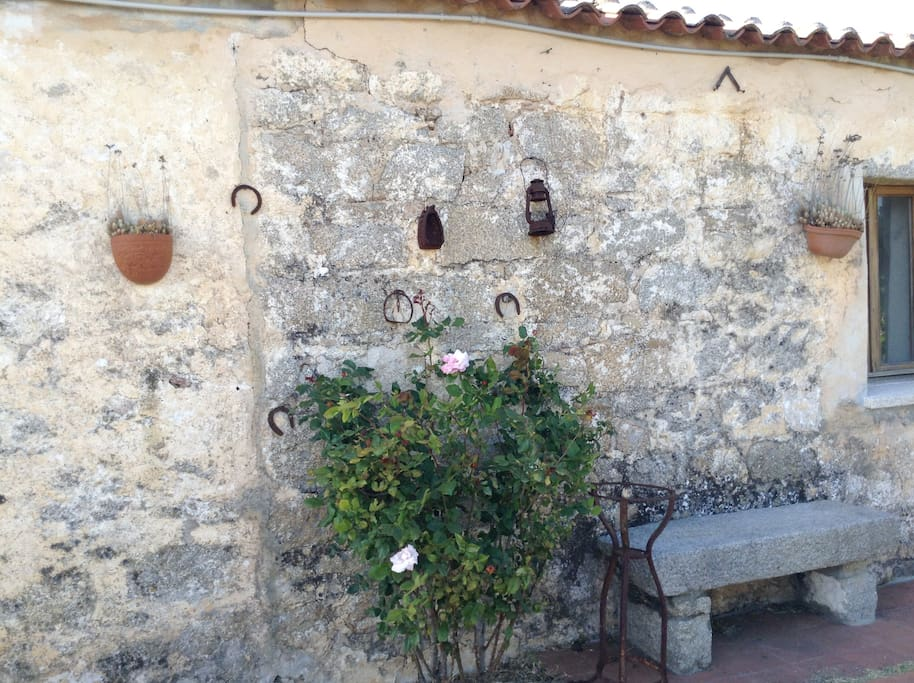 Stone wall and roses