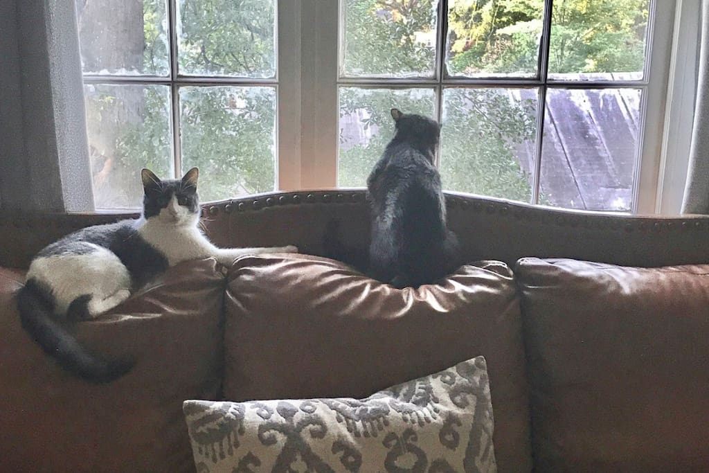Our cozy living room upstairs and that's Macho and Mr Pluto checking out the birds outside. These two will not be on the second floor but they might visit you guys once in a while because they are super friendly cats