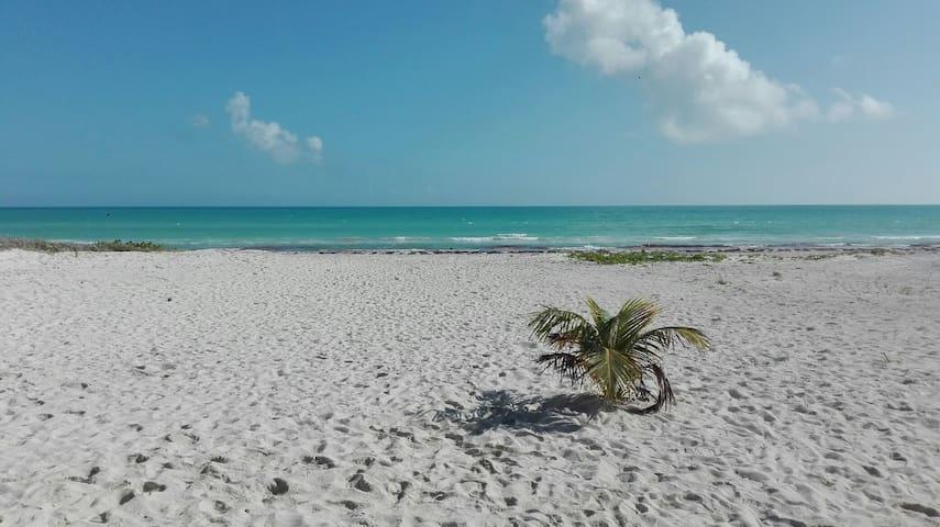 Paraiso con playas virgenes - el cuyo - Dom