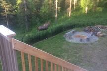 Moose by Firepit