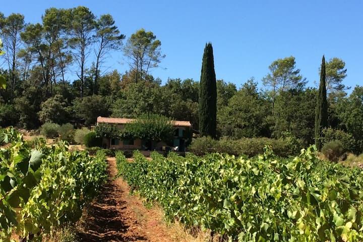 Fermette provençale au milieu des vignes