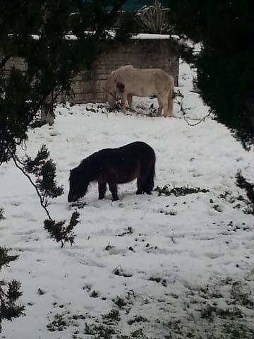 pony e falabella  di proprietà . grande attrazione per i bambini
