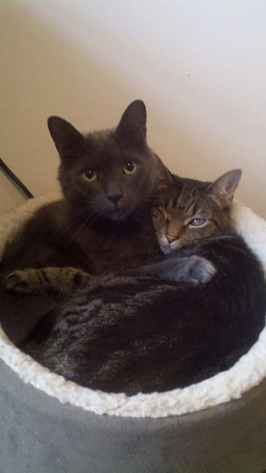 Our cats Lula and Joshua!
