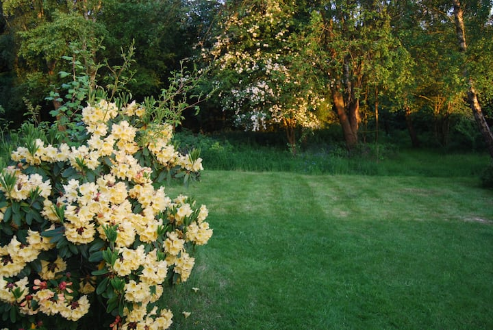 Country Cottage Woodland Garden and Gorgeous Views