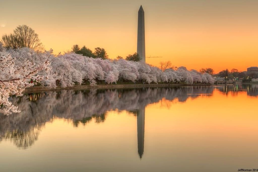 View of the Tidal Basin