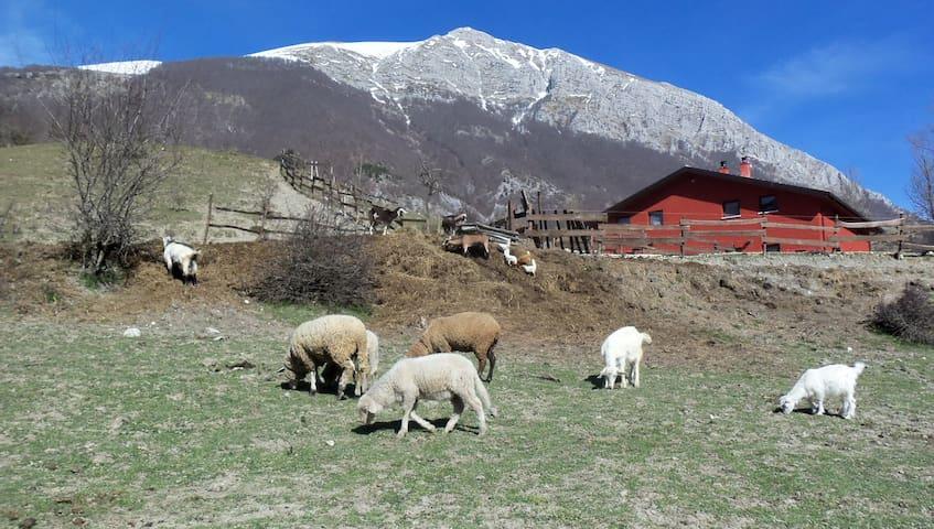 Camera family in Fattoria// Abruzzo - Opi