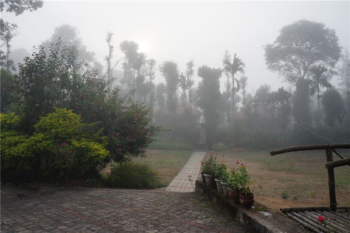 A misty morning at Treasure Trove