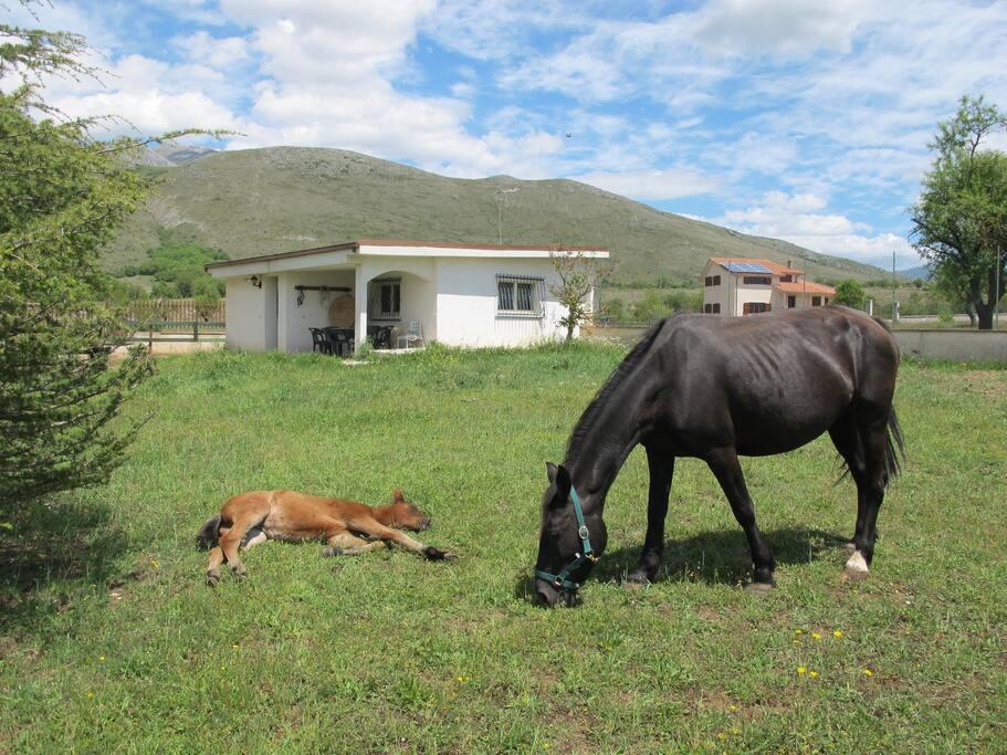 La casetta dei cavalli con la piccola Selene e Penelope la mamma