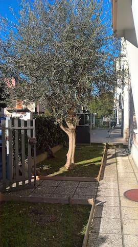 All'Ulivo..... caldo e accogliente - Ravenna - Talo