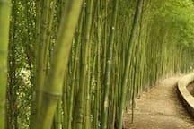 Alameda de bambus