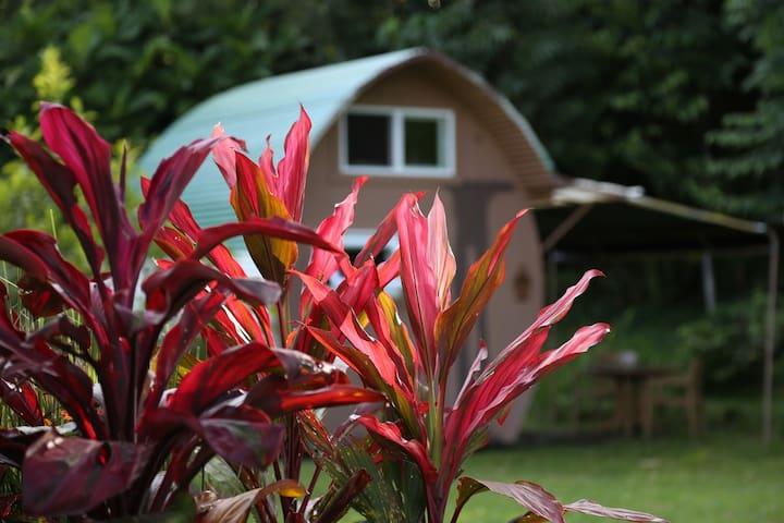Eco-Retreat: TurtlePod Glamping - Pāhoa - Bed & Breakfast
