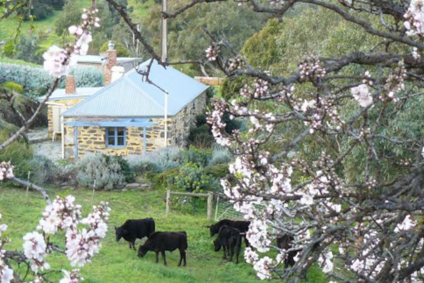 The cottage is in the middle of a 65-acre property wth cattle and horses.