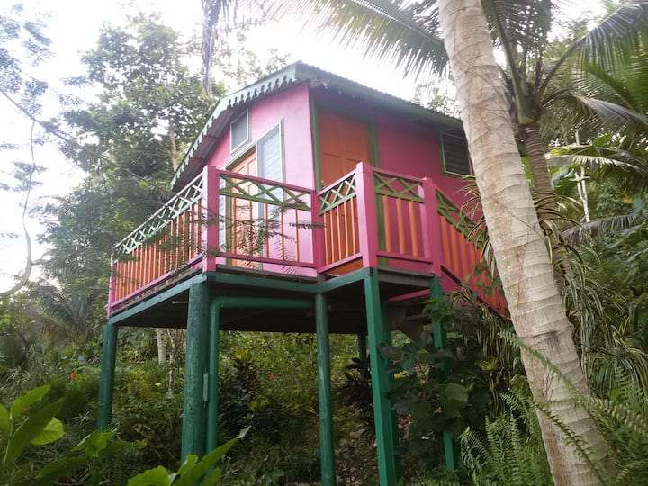 Eco-Cottage on the Edge of a Rainforest