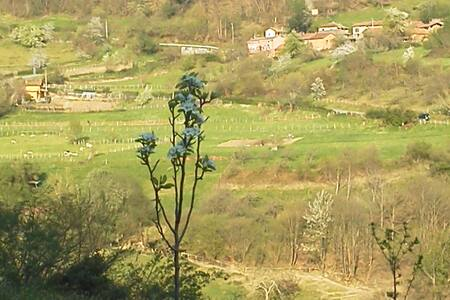 RELAX  IN BEAUTIFUL RURAL ASTURIAS - Pola de Lavina