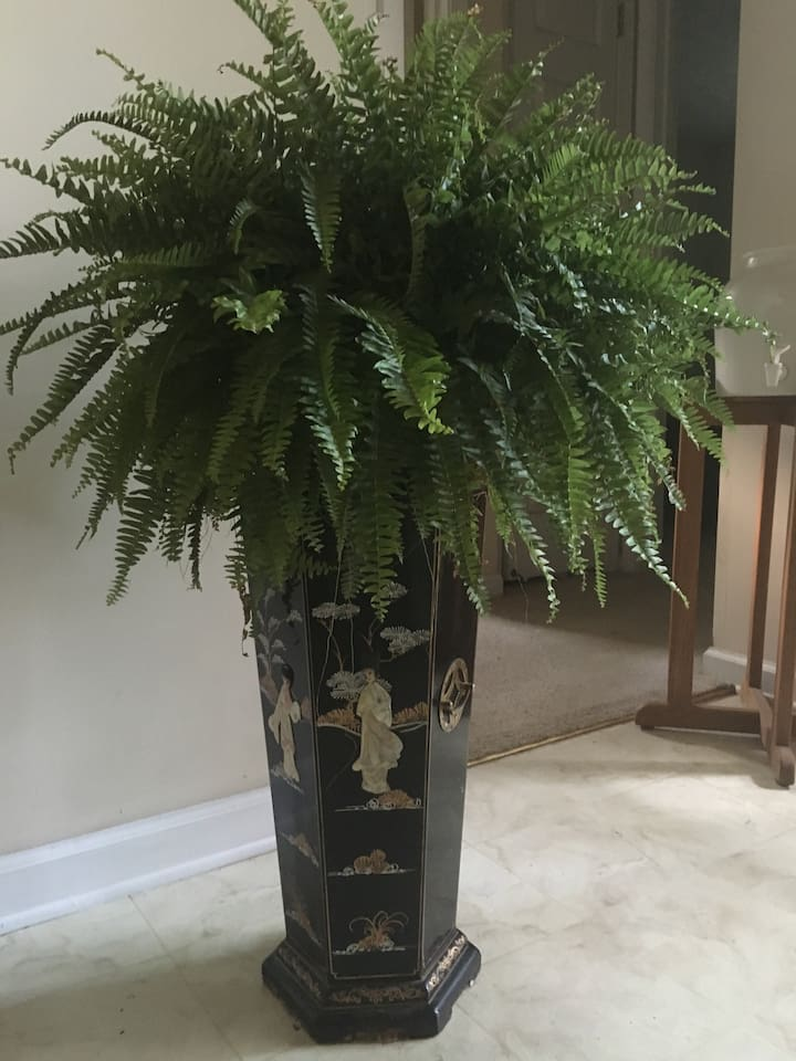 Hall foyer with welcome fern.