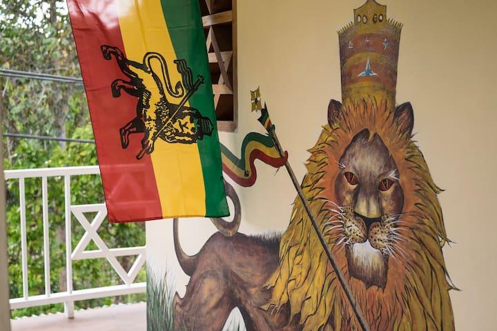 The Lion House -  Afrika