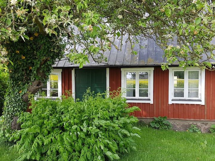Örum - in the fields of Österlen