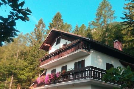Forest Getaway - Loft Suite