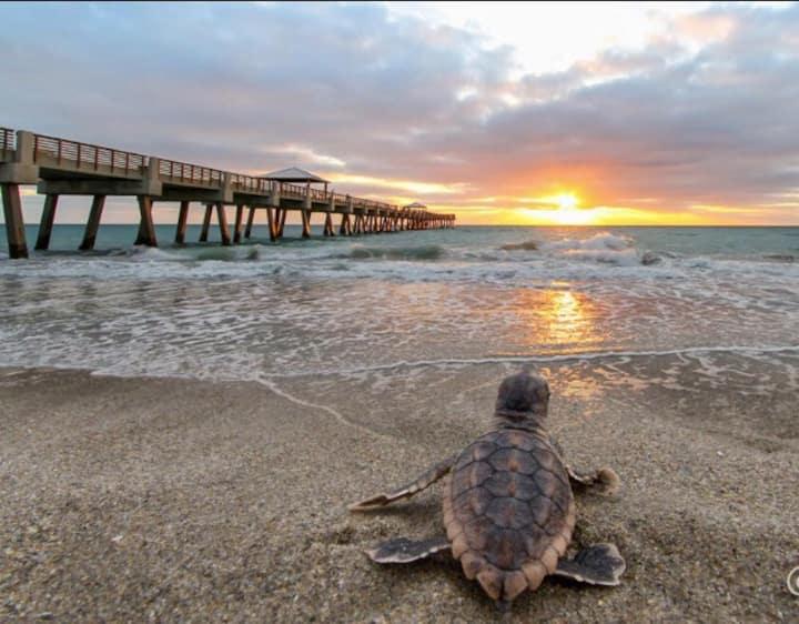 Bungalow 10  Steps to Beach.  Sea Sunrise, Juno