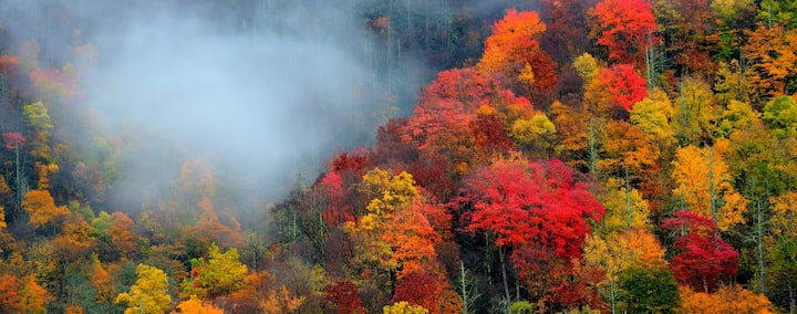 """Join us for the Fall Season at """"Pedallers Rest""""."""
