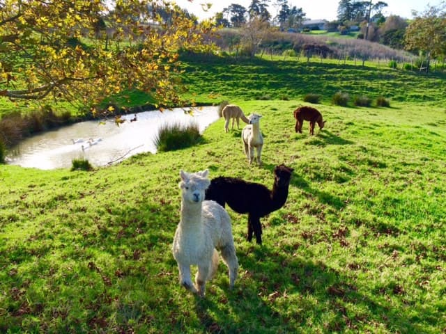 Quiet getaway near Auckland - Helensville