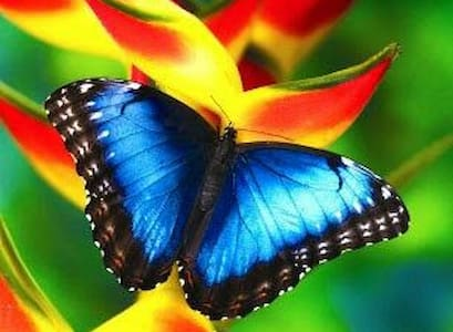 The Morpho butterfly room - La Fortuna - Outros