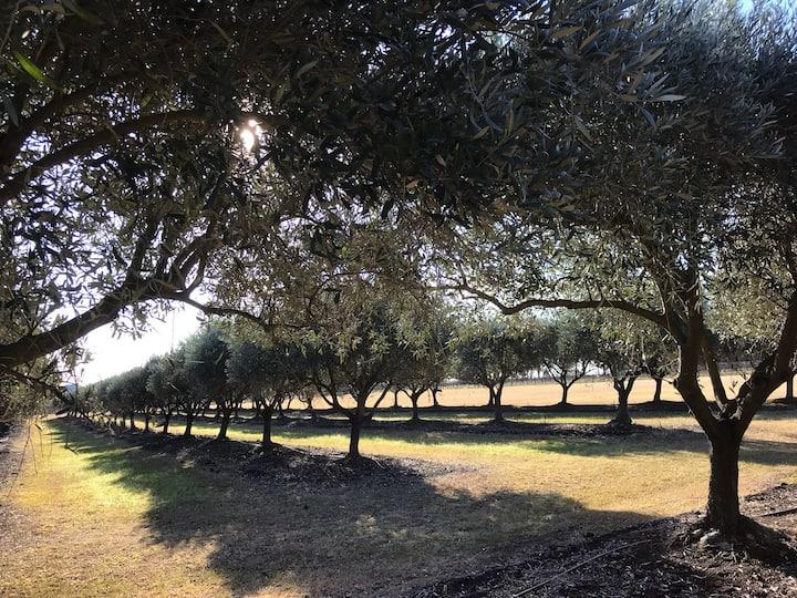 Olive Lane