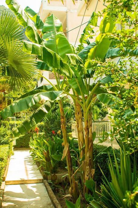 Ο κήπος μας- Our garden