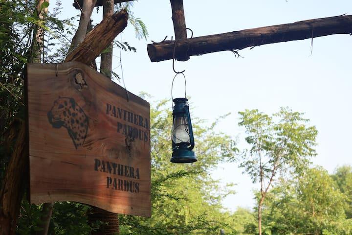 Dev's Campground