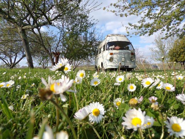 Superbe van aménagé dans un camping écologique - Monestier - Camper