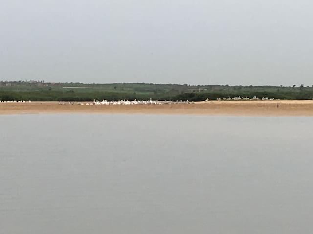 Flamants sur la lagune
