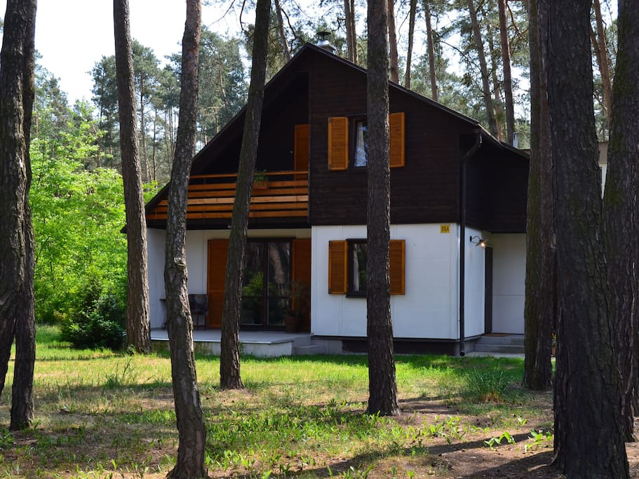 Cottage in a pine wood