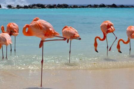 Say hello to 2017 at The Renaissance Aruba! - Oranjestad - Lomaosake