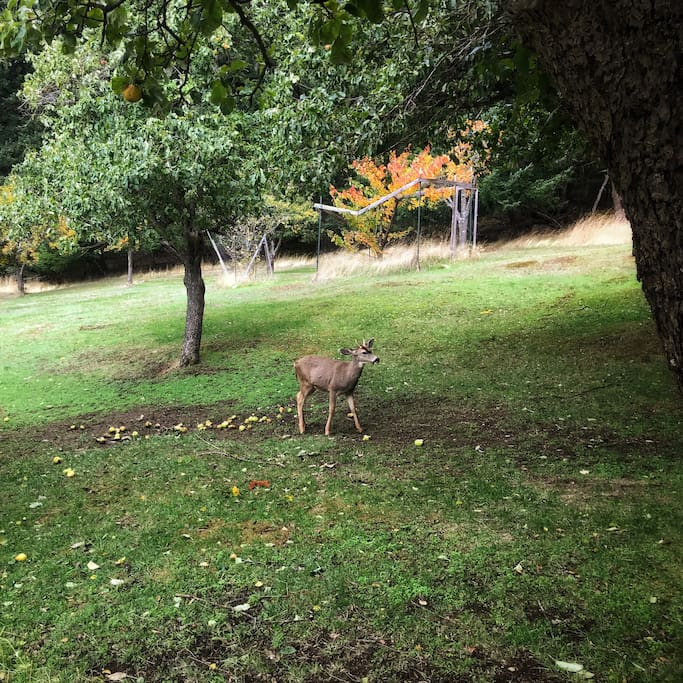 Deer - usually a whole herd is there