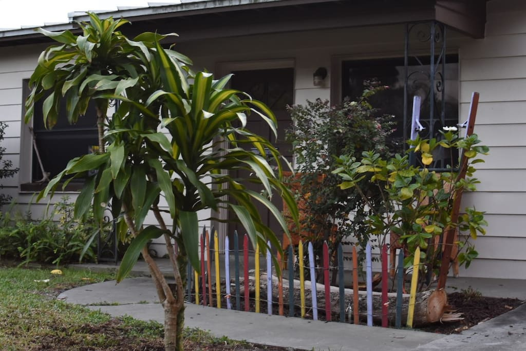 Front Yard with Corn Plant and Gardenia