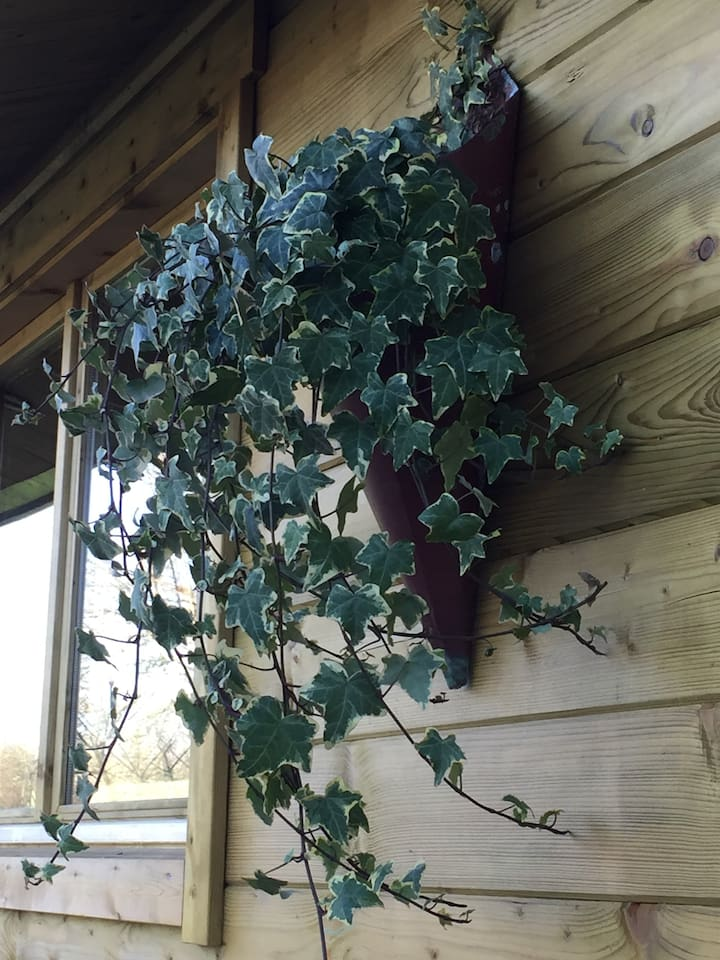 The Cabin is complimented with wall planters comprising trailing ivy.