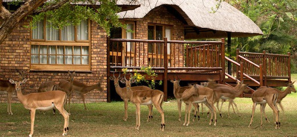 Kruger Park Lodge - Experience Africa - Hazyview - House