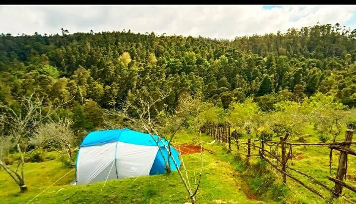 Corona safe - Nature camping in an Organic Farm