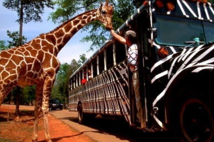 Pine Mountain Animal Safari