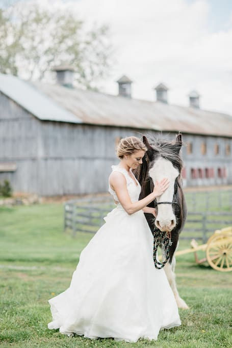Our Clydesdale Jack flirting with a beautiful bride--you might see some bride models in the distance during your stay but you won't witness a wedding; unless of course it's yours!