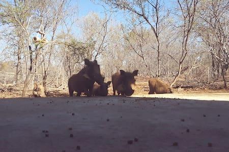 BushBaby Villa - Hoedspruit